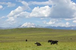 Zhakra and yaks