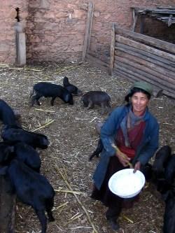 Tsering Lhamo raising pigs